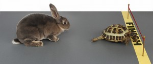 tortoise beating hare across finish line